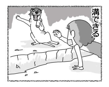 羊の国のラブラドール絵日記シニア!!「インスタント溝」4