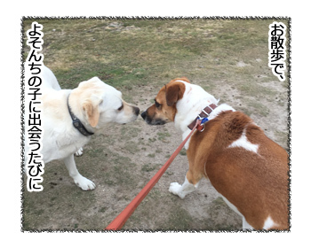 08022017_dog1.jpg