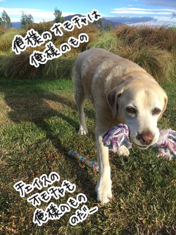 09012017_dog1.jpg
