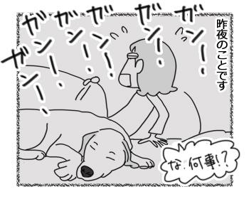 12122016_dog1.jpg