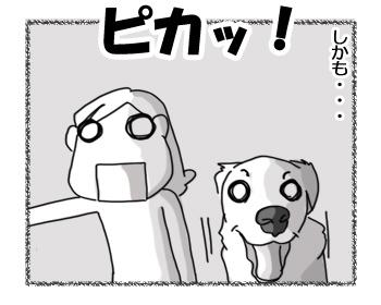12122016_dog3.jpg