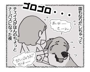 12122016_dog4.jpg