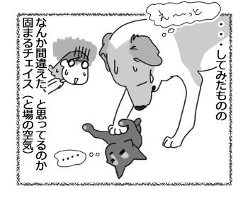羊の国のラブラドール絵日記シニア!!「猫語は難しいデース」4