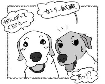 14012017_dog2.jpg