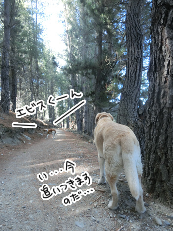 15012017_dog3.jpg