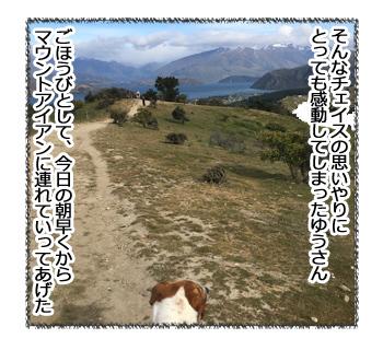 羊の国のラブラドール絵日記シニア!!「ルーティーンを大切に!」2