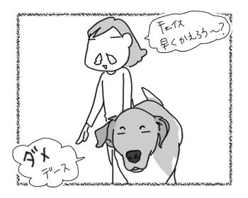 20122016_dog5.jpg
