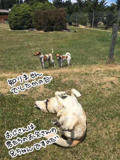 羊の国のラブラドール絵日記シニア!!「うわさの真相」3