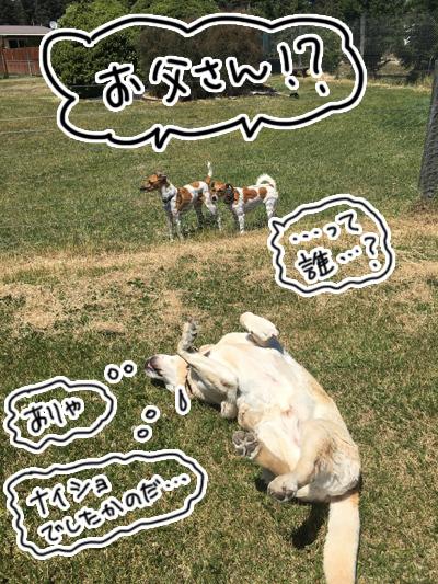 羊の国のラブラドール絵日記シニア!!「うわさの真相」4