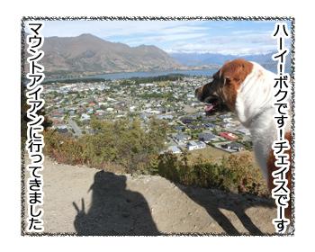 24012017_dog1.jpg