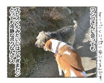 24012017_dog3.jpg