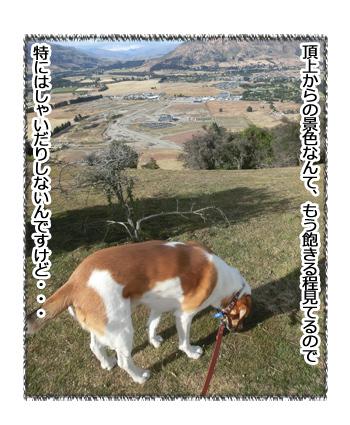 24012017_dog5.jpg