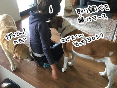 28012017_dog2.jpg