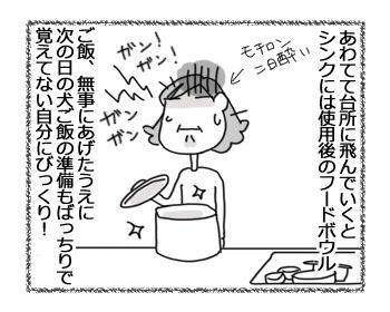 29012017_dog4.jpg