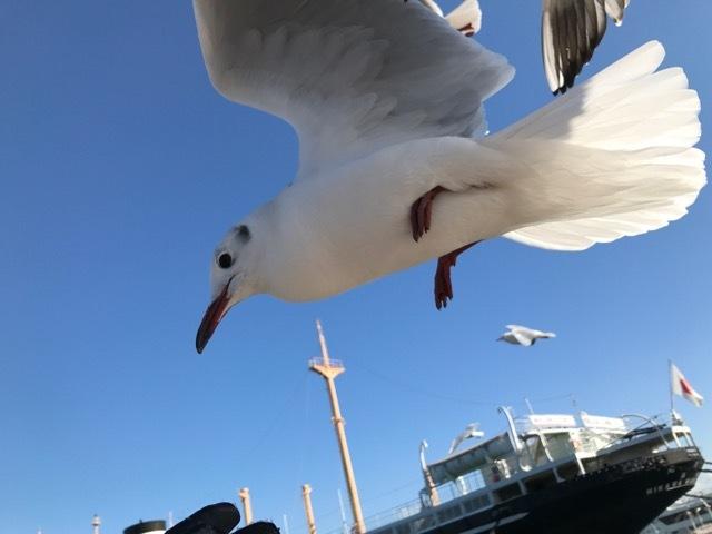 初乗り海ポタ (9)