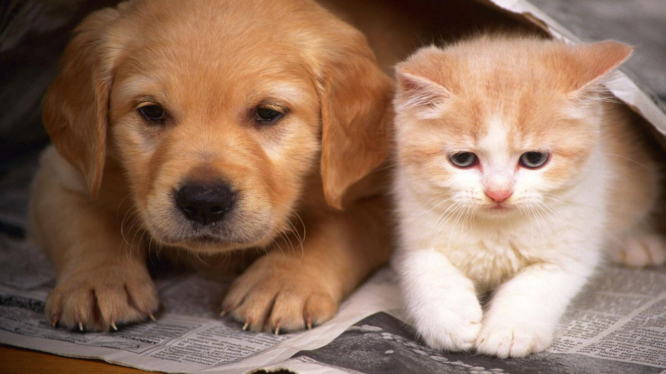 free-dog-and-cat-images-download.jpg