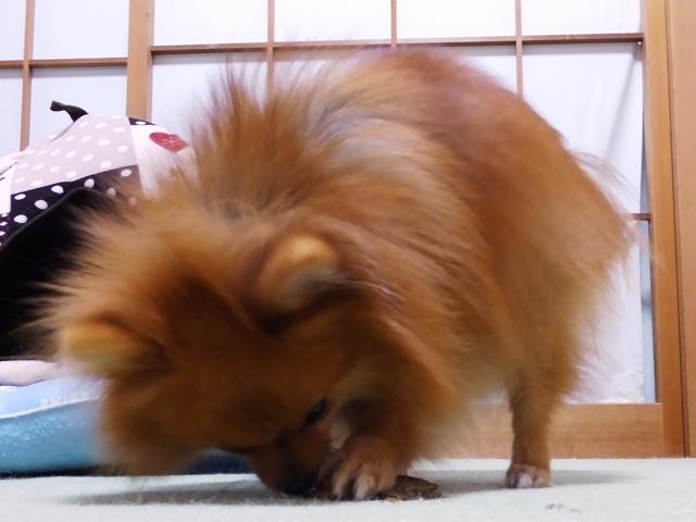20161112ポン太鮭尻尾⑥