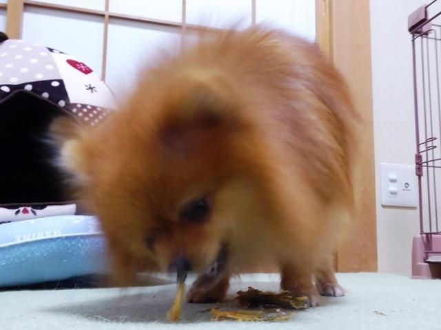 20161112ポン太鮭尻尾⑧