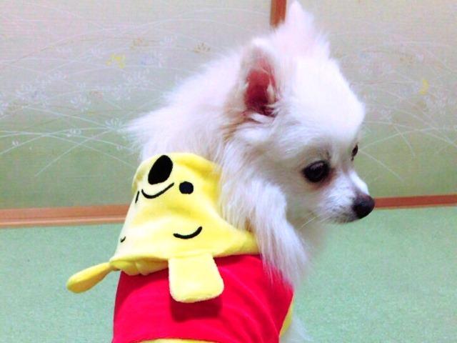 20161120ポンころプーさん⑤