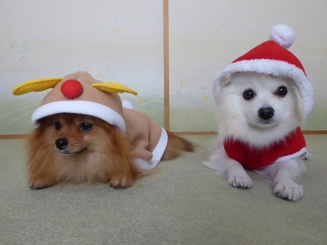 20161126ポンころクリスマス衣装④