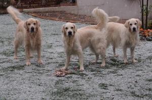 雪の中の3人組