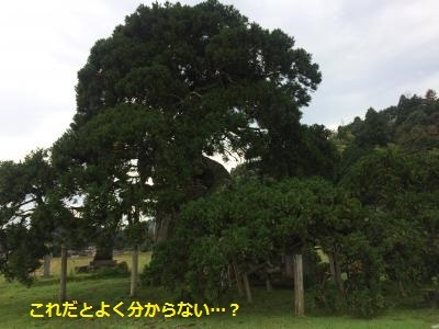 IMG_0139_convert_20170121222035.jpg