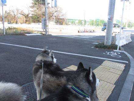 ふたりで朝散歩