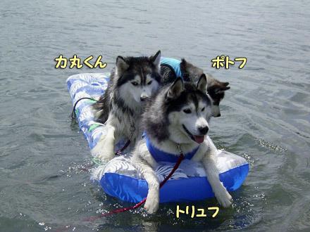 力丸くん&トリュフ&ポトフ西湖水遊び
