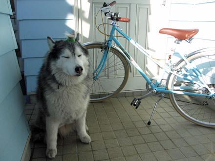 おニューの自転車
