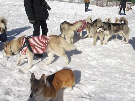 woofで雪遊び