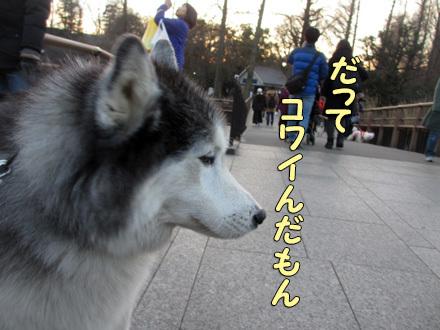 新春井の頭公園散歩
