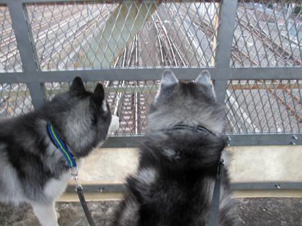 電車観察始
