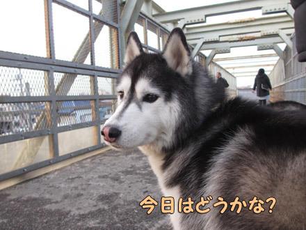 ダイアモンド富士観察日記
