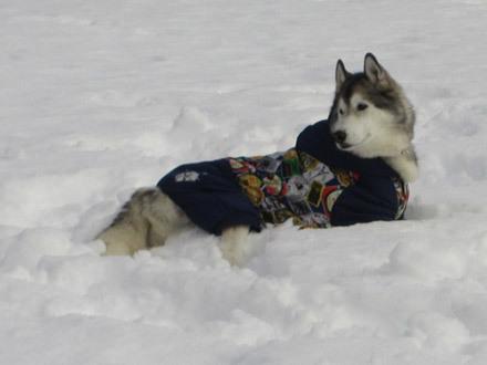 雪にズボズボ