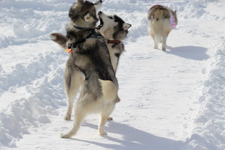 woof雪遊び