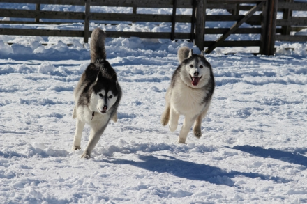 woof雪の上を爆走