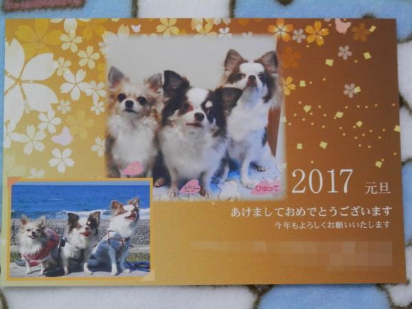 P1060961_convert_20170107003254.jpg
