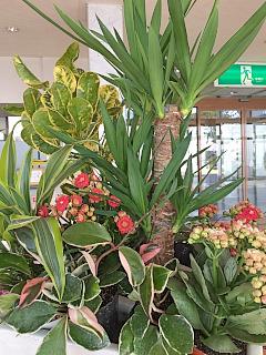 やっぱり南国の植物で