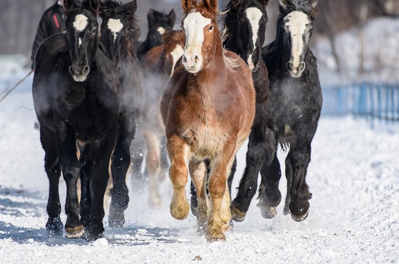 馬追い (12 - 18)