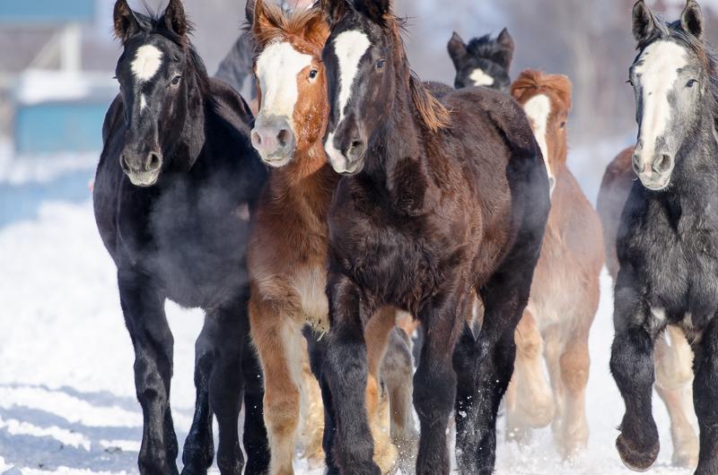 馬追い (14 - 18)