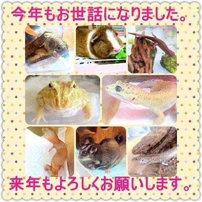 IMG_aisatu20163.jpg
