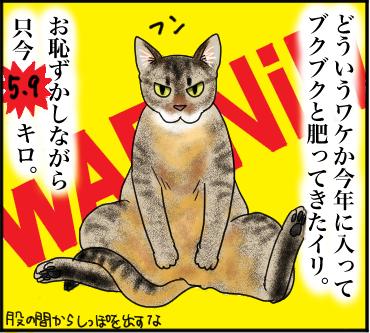 己を知らぬ猫1