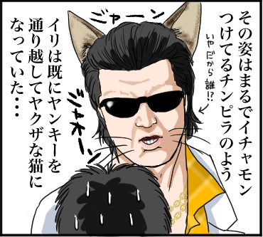 ヤバい猫4