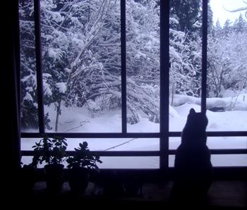 さくらと雪