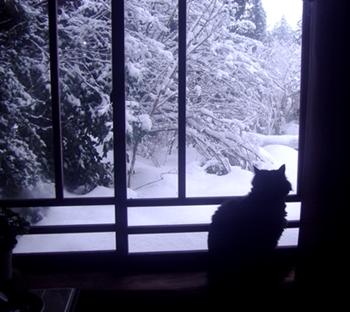 おはぎと雪