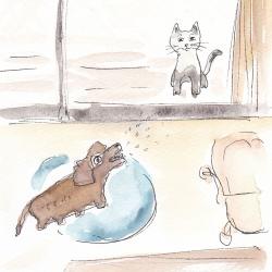 いもあられ@よそんちの猫とうちの犬