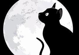 クロ猫と月