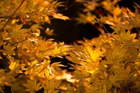 晩秋の庭2016