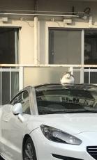 【競馬】 岩崎翼騎手、高級車っぽい車をツイッターに上げる