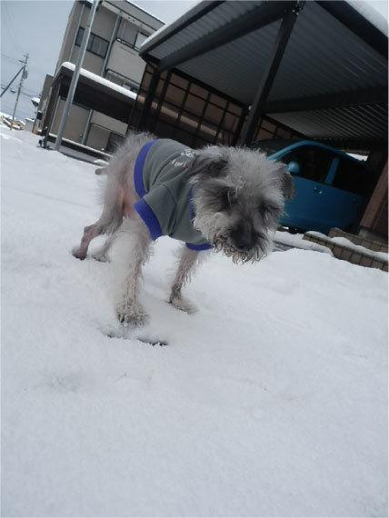 雪とセシル_1